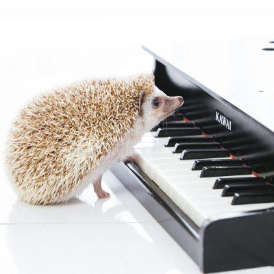 <作業療法と音楽療法>~音を楽しむ あなたのこころに音楽を~